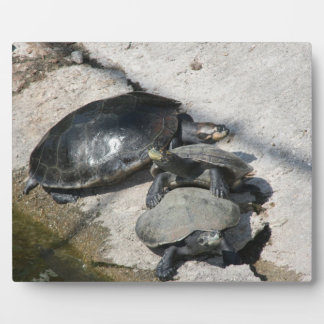Slider turtles in a row photo plaque