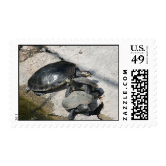 Slider turtles in a row photo postage stamps