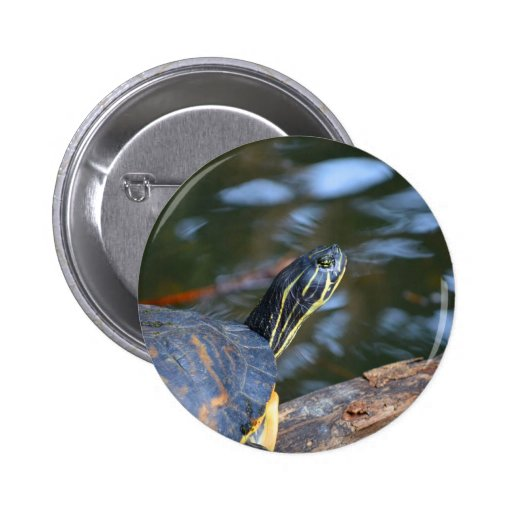 slider water turtle head out of shell button