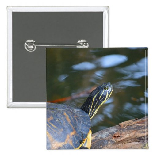slider water turtle head out of shell pin