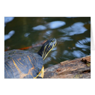 slider water turtle head out of shell stationery note card