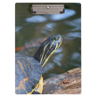 slider water turtle head out of shell clipboards