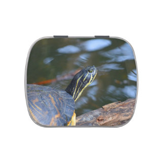 slider water turtle head out of shell jelly belly tin