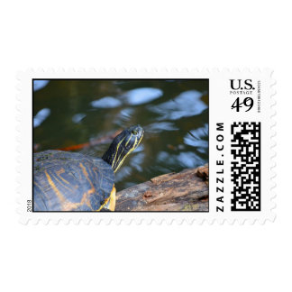 slider water turtle head out of shell stamps