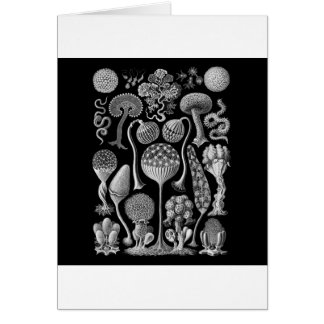 Slime Molds in Black and White Card