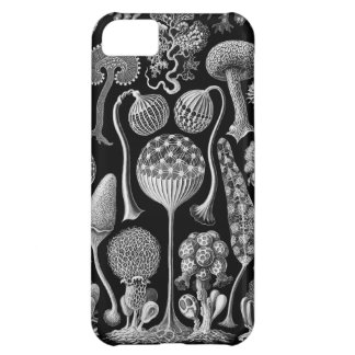 Slime Molds in Black and White iPhone 5C Case