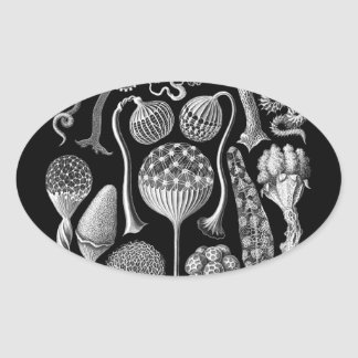 Slime Molds in Black and White Oval Sticker