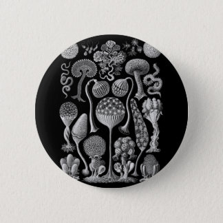 Slime Molds in Black and White Pinback Button