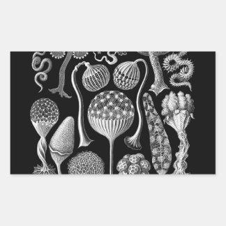 Slime Molds in Black and White Rectangular Sticker