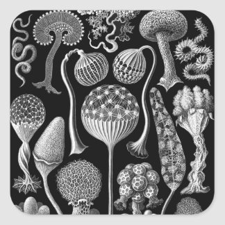 Slime Molds in Black and White Square Sticker