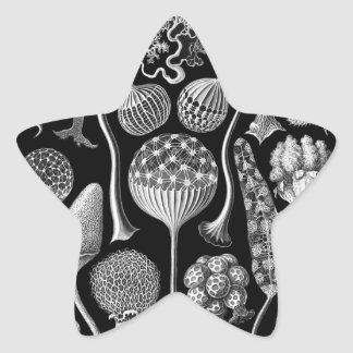 Slime Molds in Black and White Star Sticker