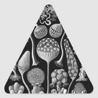 Slime Molds in Black and White Triangle Sticker