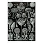 Slime Moulds Card