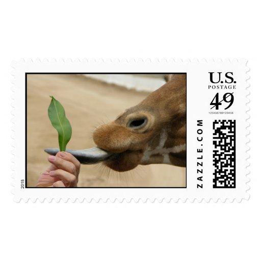 Slippery tounge Giraffe Stamps