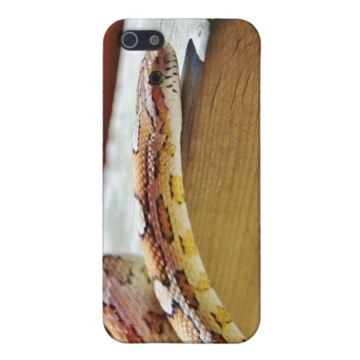 Slithering Red Corn Snake Cover For iPhone 5