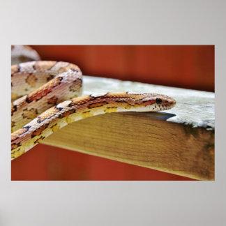 Slithering Red Corn Snake Poster