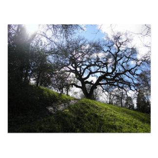 Slope and Oak Postcard