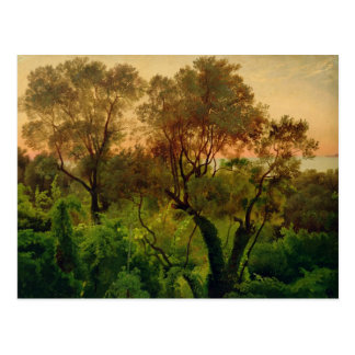 Slope with Olive Trees Postcard