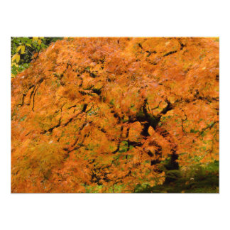 Slopeside Maple Photo Print