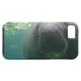 Sloppy Manatee iPhone 5 Tough iPhone SE/5/5s Case
