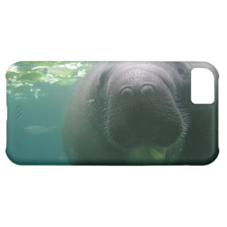 Sloppy Manatee iPhone 5C iPhone 5C Case