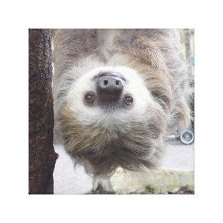 "Sloth 12"" x 12"" Canvas Print"