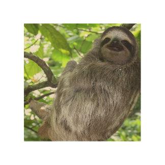 sloth-14.jpg wood prints