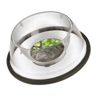 sloth-14.jpg pet bowl