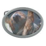 sloth-15.jpg belt buckles