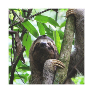 Sloth_20171101_by_JAMFoto Canvas Print