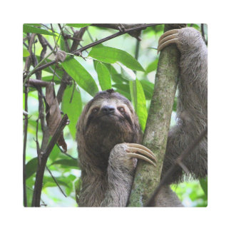 Sloth_20171101_by_JAMFoto Metal Print