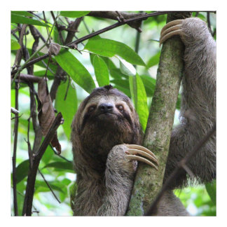 Sloth_20171101_by_JAMFoto Photo Print