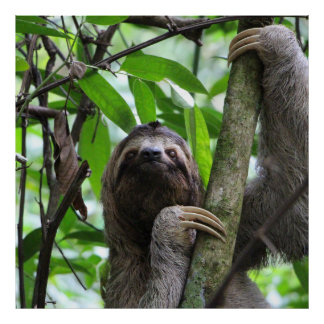 Sloth_20171101_by_JAMFoto Poster