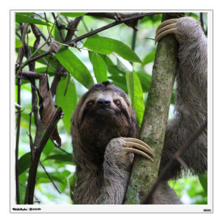 Sloth_20171101_by_JAMFoto Wall Sticker