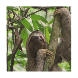 Sloth_20171101_by_JAMFoto Wood Wall Art