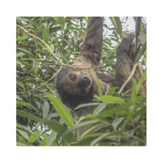 Sloth_20171103_by_JAMFoto Metal Print