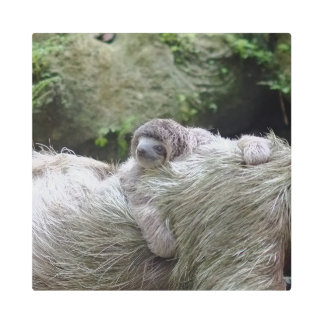 Sloth_20171104_by_JAMFoto Metal Print