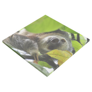 Sloth_20171105_by_JAMFoto Gallery Wrap