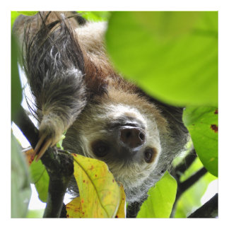 Sloth_20171105_by_JAMFoto Photo Print