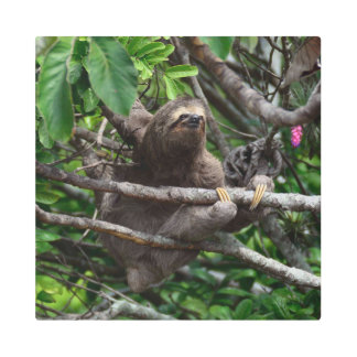 Sloth_20171106_by_JAMFoto Metal Print