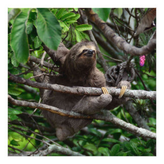 Sloth_20171106_by_JAMFoto Photo Print
