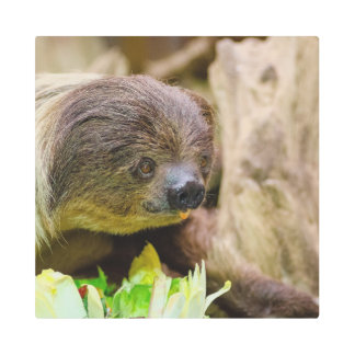 Sloth_20171108_by_JAMFoto Metal Print