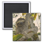 sloth 2 inch square magnet