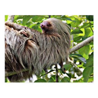 Sloth 2 postcard