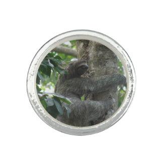 sloth-4 jpg anillos