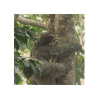 sloth-4.jpg wood canvases