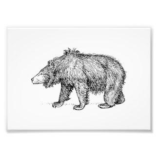 Sloth Bear Photograph