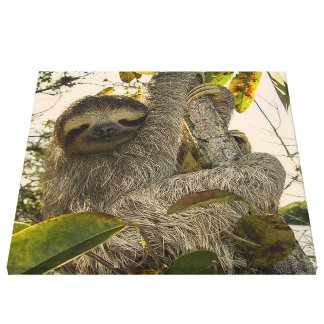 sloth stretched canvas print