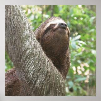 Sloth Climbing Print