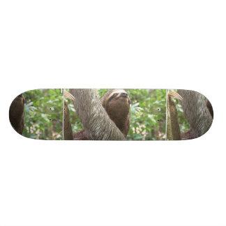 Sloth Climbing Skateboard Decks